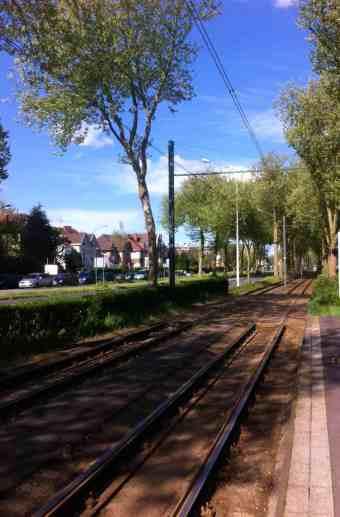 arbres rail