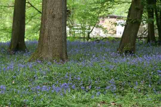 sous bois bleu 4